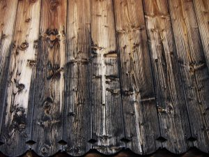 Some insights about black Japan timber